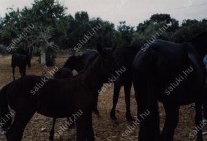 cavalls-2