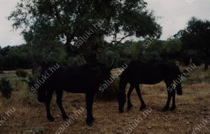 cavalls-3