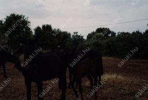 cavalls-4